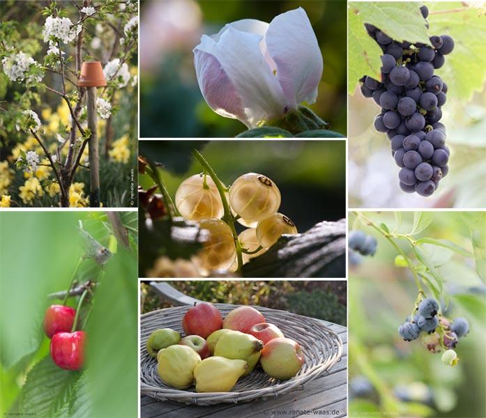 empfehlenswerte Obstsorten und Beerensorten für den Garten