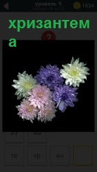 Несколько цветов хризантема в букете разного цвета на темном фоне