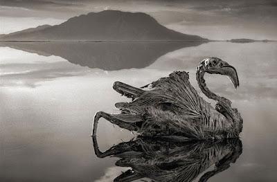 بحيرة ناترون هل تحول الحيوانات إلي أحجار حقاً ؟!