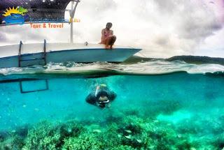 indahnya bawah laut karimunjawa