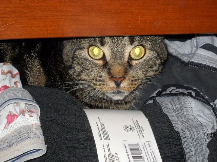 taby cat in drawer