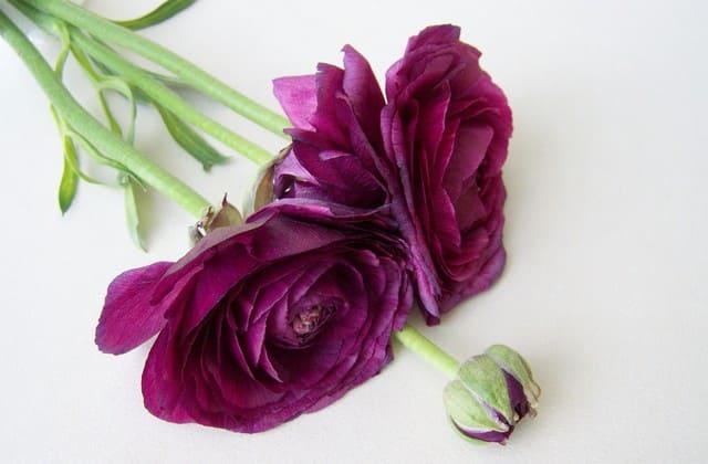 Bunga mawar potong