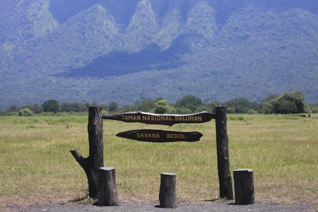 Savana Bekol Taman Nasional Baluran.