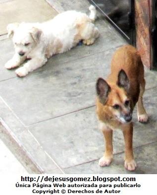Fotos de perros en la vereda de la calle de Jesus Gómez
