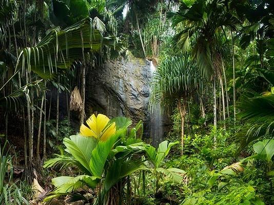 Giungla Valle de Mai Seychelles