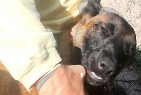 Ραγίζει καρδιές: Σκύλος κολύμπησε 10 χλμ και μετά περπάτησε άλλα 19 για να ξαναβρεί τους ιδιοκτήτες του! (PHOTOS)