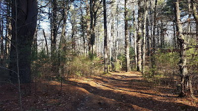 a trail in the State Forest that can be reached when you take a side trail from the SNETT
