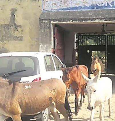 8 donkeys spent 3 days in jail for eating plants and destroying flower pots