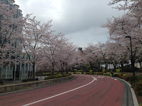 Tokyo Midtown cherry blossom