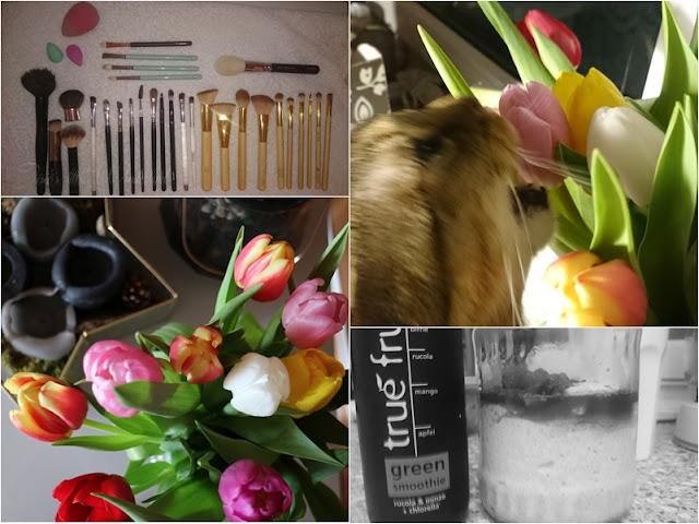 Wochenrückblick | Sunny Sunday #76 - www.josieslittlewonderland.de, weekreview, schattiges nordland, blog, life, die sache mit dem leben, make up pinsel, zoeva, ebelin, tulpen, blumen, ein bisschen frühling