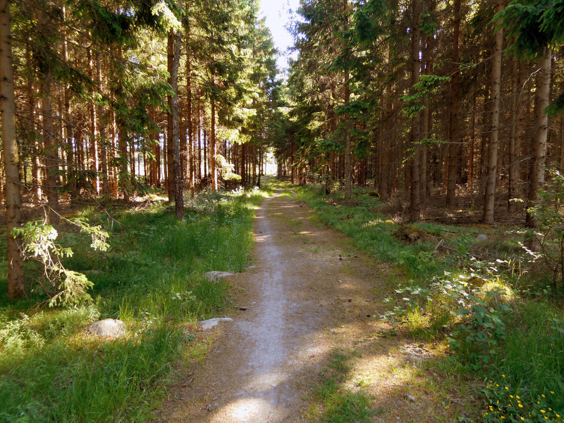 Giro di corsa in bosco
