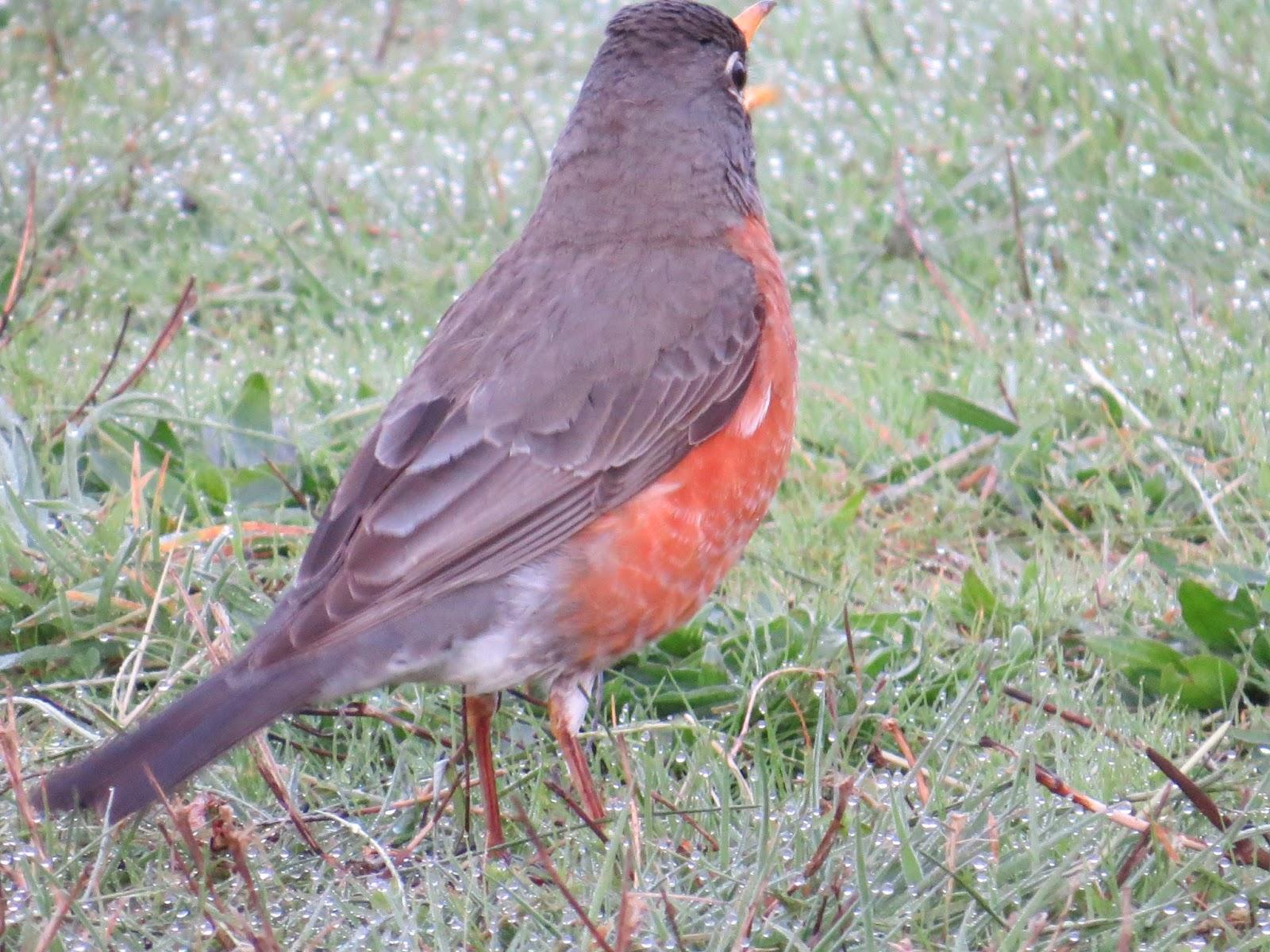 Garden Grumbles And Cross Stitch Fumbles April S Blog Header