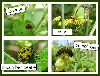 https://www.teacherspayteachers.com/Product/Insect-Photo-Sentence-Picture-Match-Reading-and-Science-Center-1646977