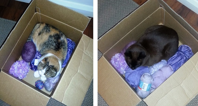 cats and knitting and boxes - irresistible!