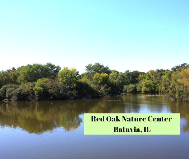 Hiking and Birding at Red Oak Nature Center along the Fox River in Batavia, Illinois
