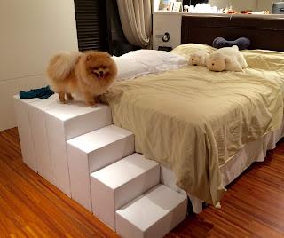 melhor escada para cães