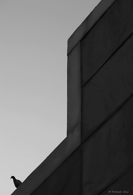 A Black and White Minimalist Photograph of a Lone Dove sitting on the Walls of Jawahar Kala Kendra building.