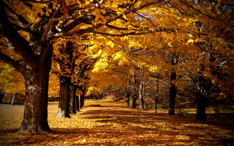 funny pictures gallery fall forest background fall