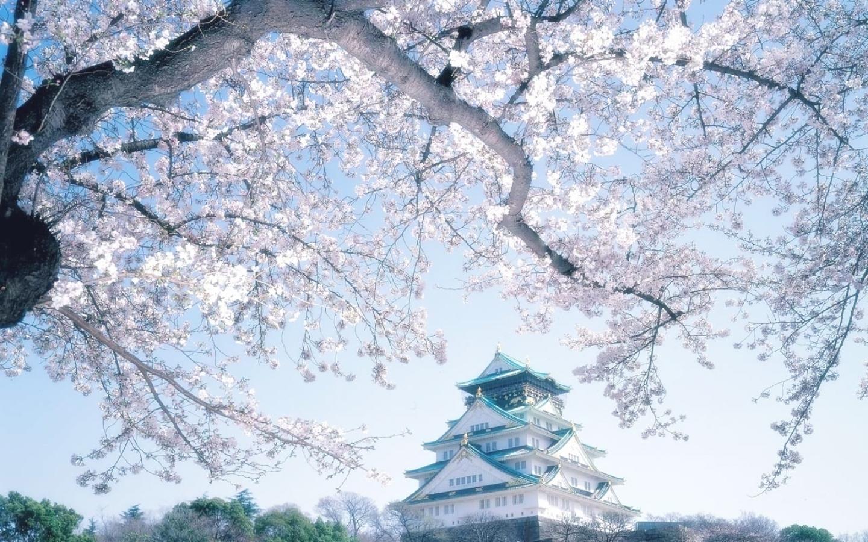 Image result for ฤดูหนาวของโอซาก้า