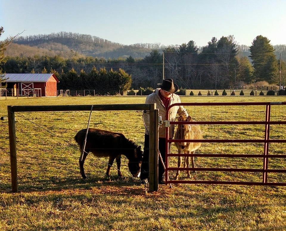 two miniature donkeys by a gate