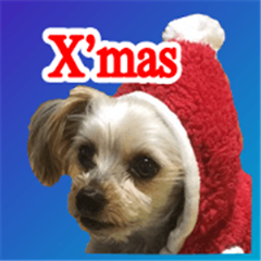 These are Yorkie's Christmas stickers