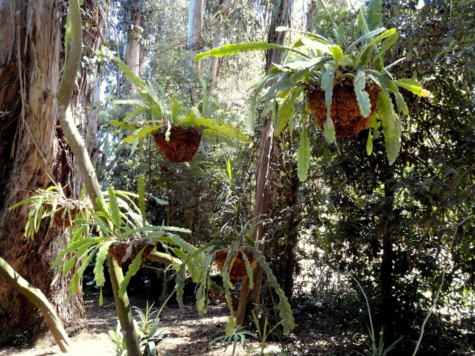 lotusland the tropical garden en route to the cycad garden - Tropical Garden 2016