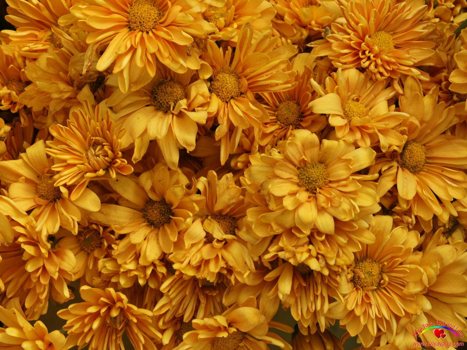 Twila Mann: orange flower background