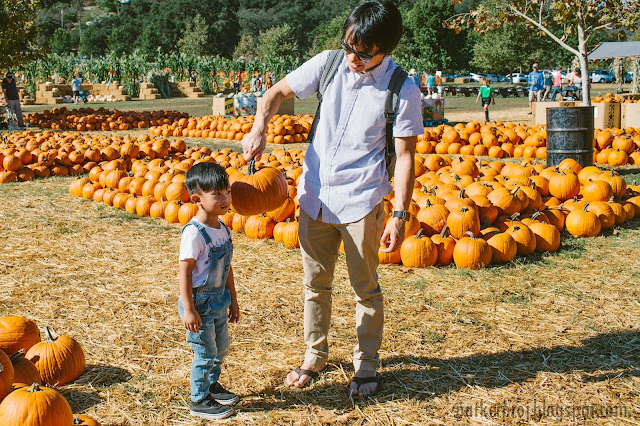 Bates Nut Farm, San Diego family, pumpkin patch, San Diego, fall