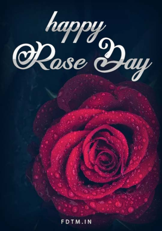 Rose Day Wallpapers Free Download