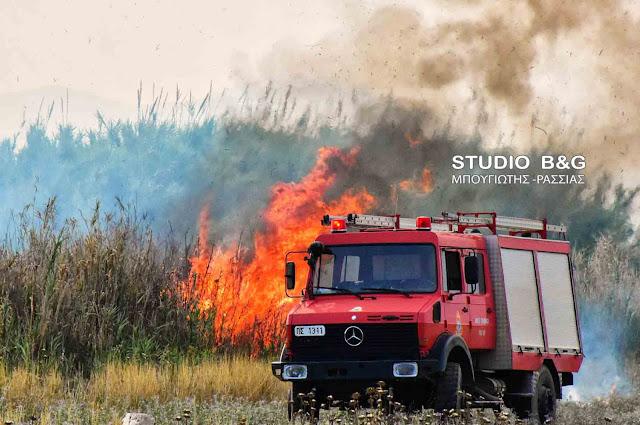 Πυρκαγιά στα Φίχτια Αργολίδας