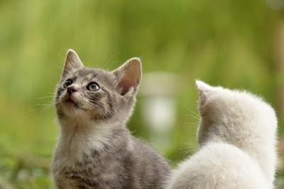 Comemorado no dia 8 de Agosto, essa data foi criada pela International Fund for Animal Welfare. Gatos são animais que estão sendo adotados como animais de estimação, cada vez mais nos dias atuais.