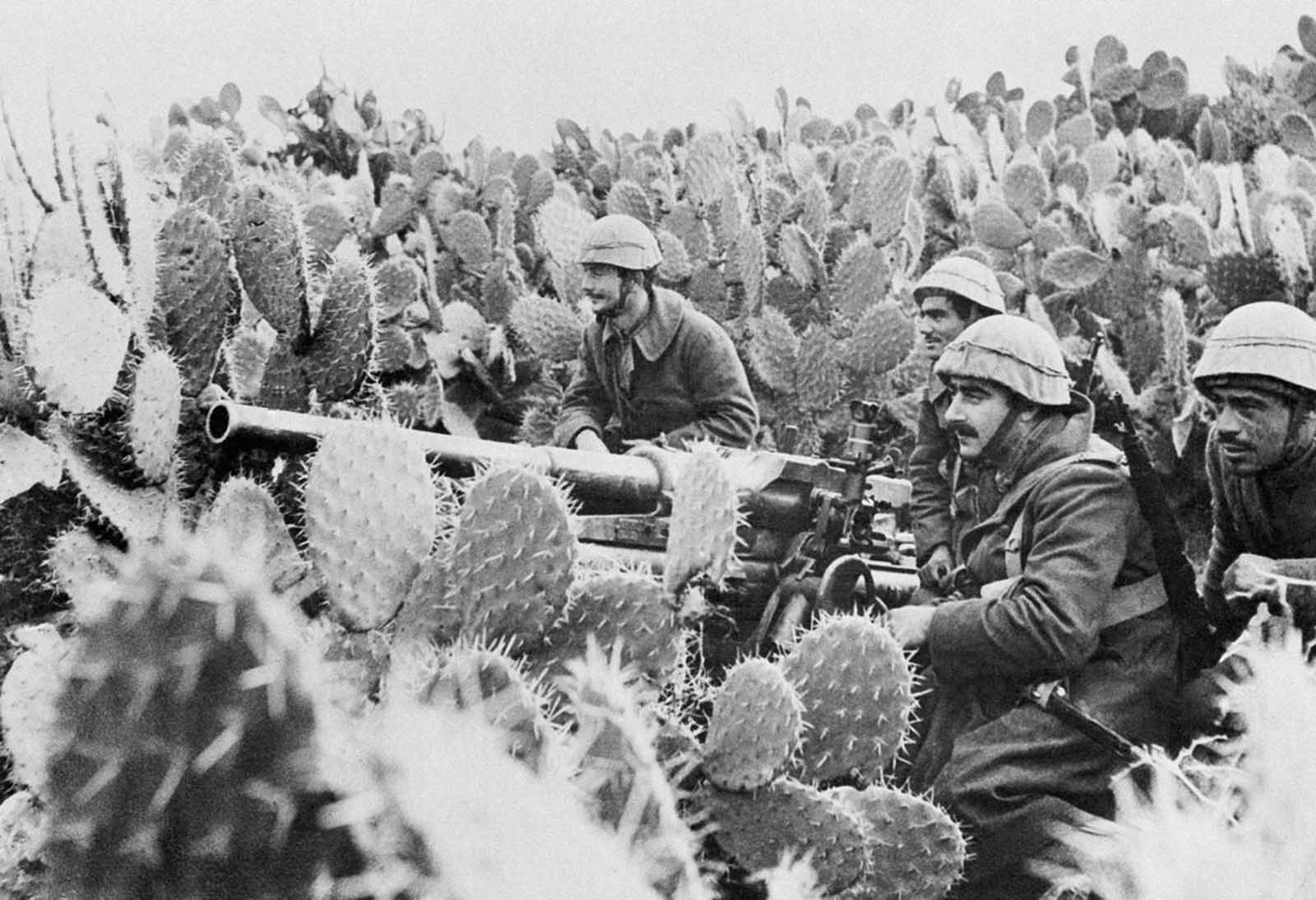 Italian gunners man their light field piece in a field of Tunisian cactus, on March 31, 1943.