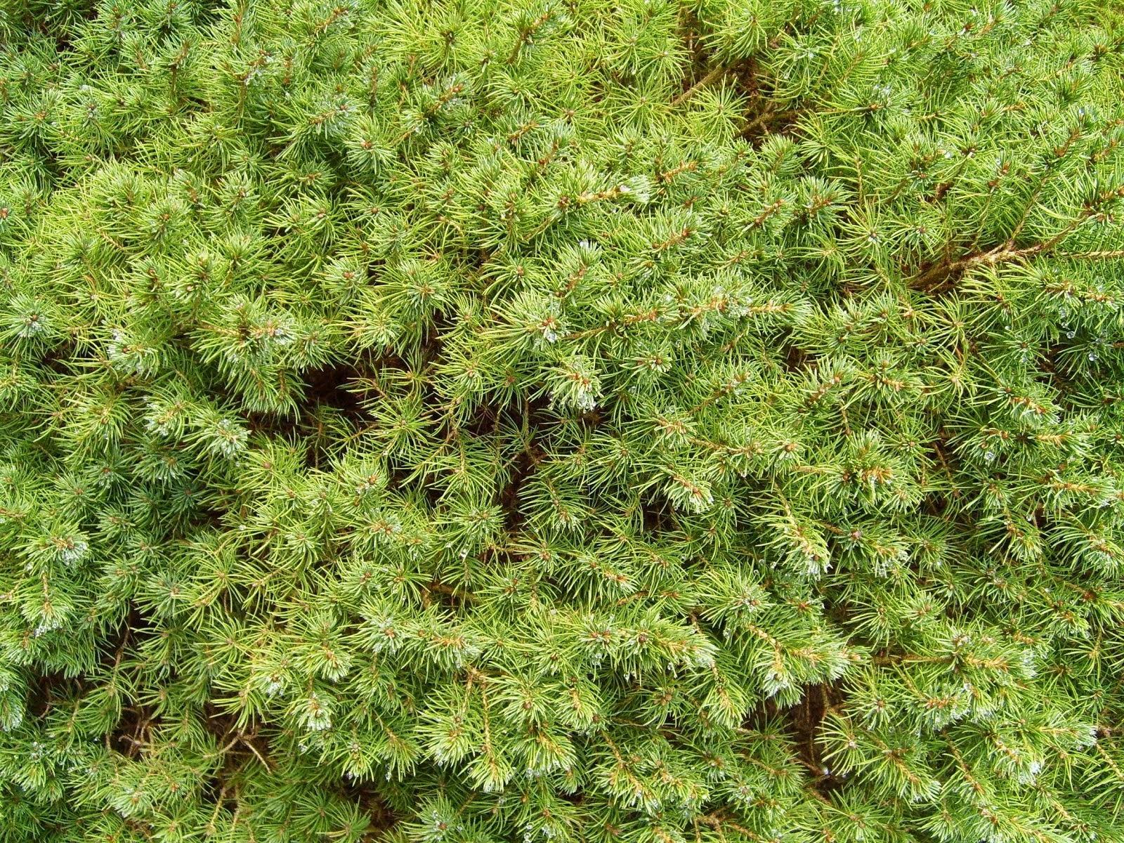 free stock photos: Leaves Plants Green Ground Bush Texture ...