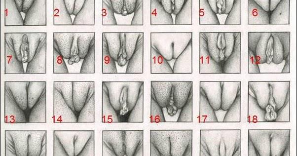 виды женских половых органов порно