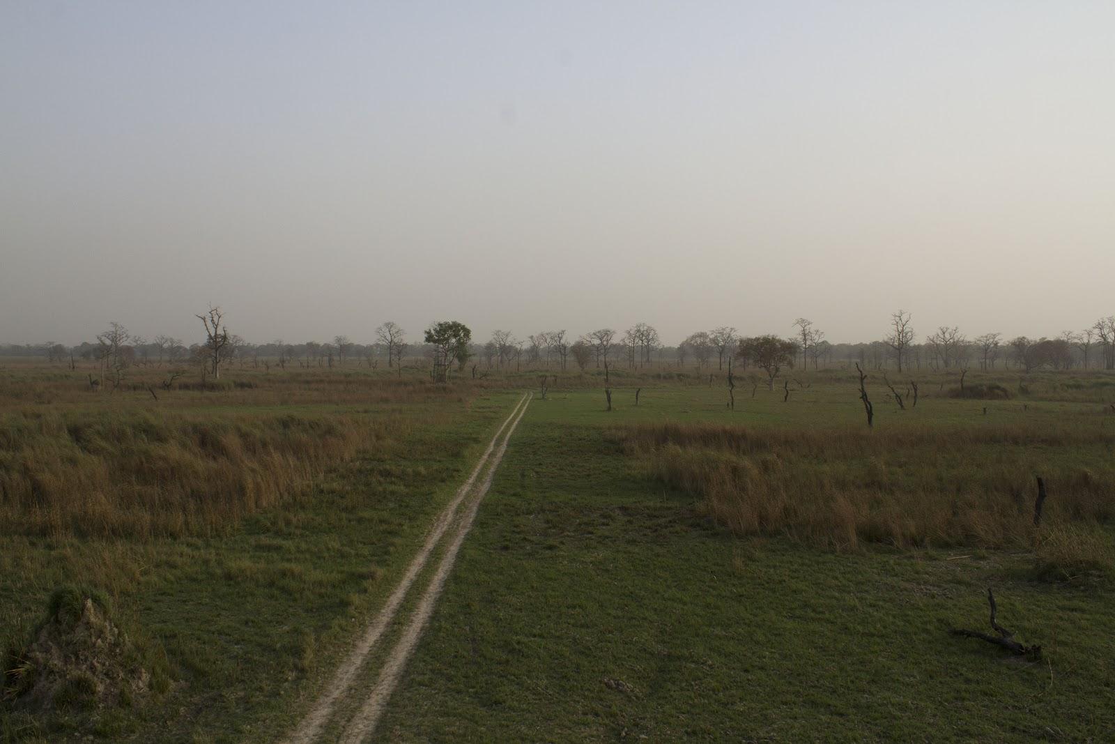 dudhwa+Landscape+4.JPG