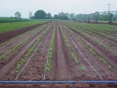 Knowing and Understanding Drip Irrigation Systems as a Solution to Increase Production In Drought