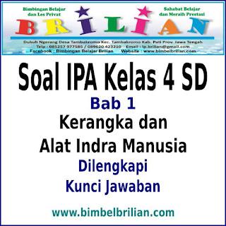 Download Soal IPA Kelas 4 SD BAB Kerangka dan Alat Indra Manusia Dan Kunci Jawaban