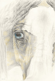horse drawing, equine art, horse blue eyes