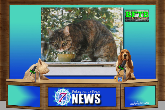 BFTB NETWoof News reports on Caturday in Boston Commons