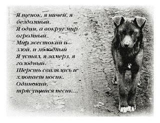 Стих про щенка