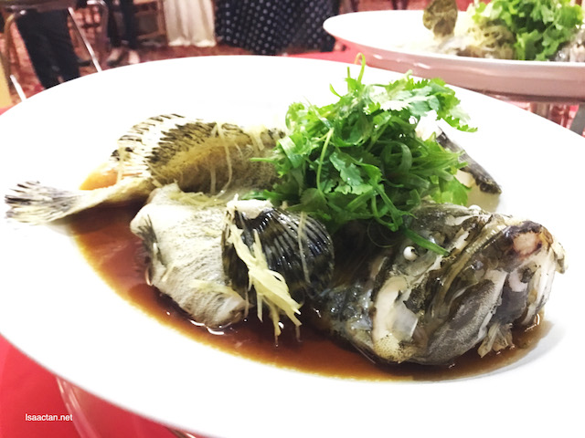 Steamed Pearl Fresh Tiger Grouper with Superior Soy Sauce