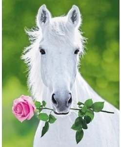 Horse Valentine Cards Printable Horse Card For Valentines