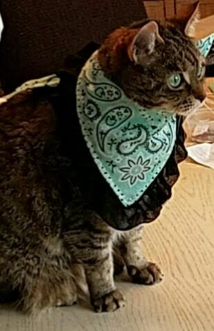 Bandanna for dogs and cats