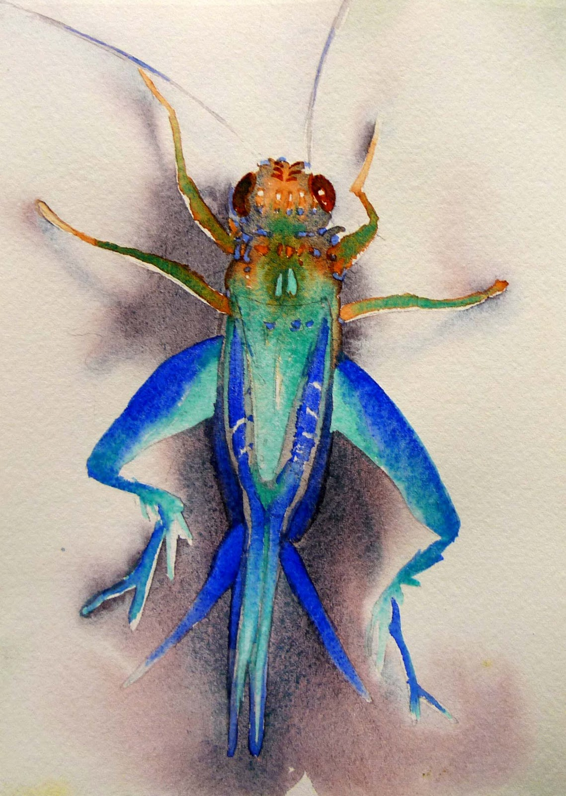 cricket life cycle diagram bmw radio wiring house species elsavadorla