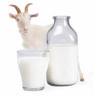 benefits of Etawa milk for health