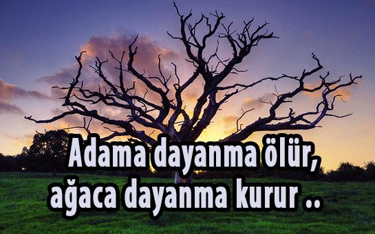 Adama dayanma ölür, ağaca dayanma kurur atasözünün anlamı