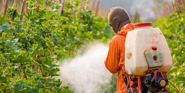 Böcek İlaçlama Ne Zaman Yapılır?