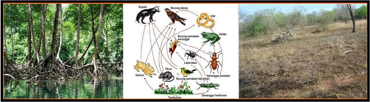 Biologi Gonzaga Komponen Ekosistem