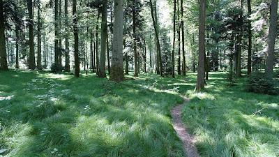 Pfad durch den lichten Wald