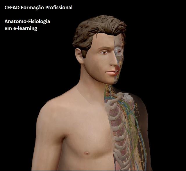 Veja aqui toda a matéria de anatomia